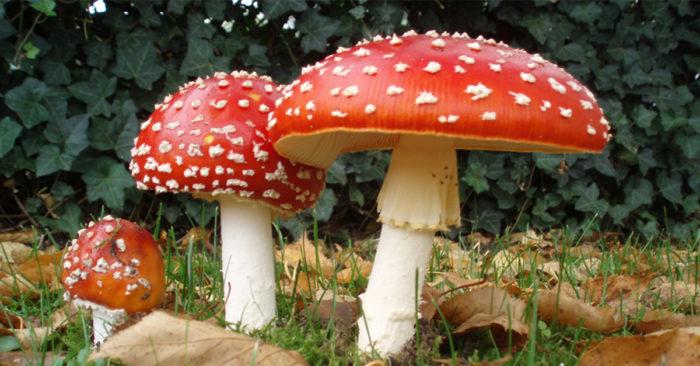 Corso Micologia - funghi